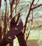 De lente het snoeien van treesn royalty-vrije stock fotografie