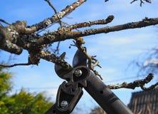 De lente het snoeien van treesn royalty-vrije stock foto's