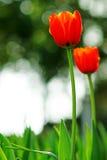 De lente het spreken Royalty-vrije Stock Foto's