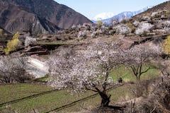 De lente in het Tibetaanse Plateau Stock Foto