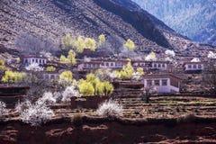 De lente in het Tibetaanse Plateau Royalty-vrije Stock Afbeelding