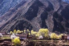De lente in het Tibetaanse Plateau Royalty-vrije Stock Foto's