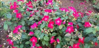 De lente het Tot bloei komen stock afbeeldingen