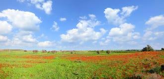 De lente het tot bloei komen van rode bloemen Royalty-vrije Stock Afbeeldingen