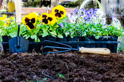 De lente het Tuinieren Stock Foto