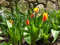 De lente het Wekken stock foto