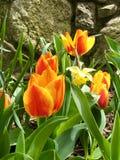 De lente het Wekken stock afbeelding