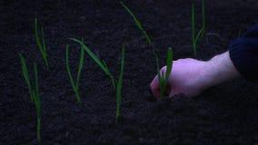 de lente het zaaien stock videobeelden