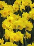 De lente is hier Royalty-vrije Stock Afbeelding