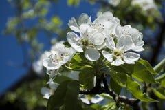 De lente is hier Stock Foto