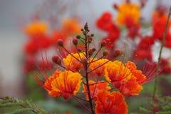 De lente is hier opnieuw Royalty-vrije Stock Fotografie