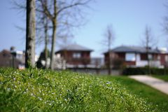 De lente in Holland Royalty-vrije Stock Foto's