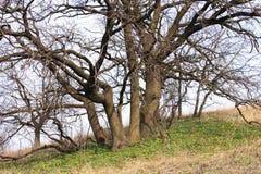 De lente in hout Royalty-vrije Stock Afbeeldingen