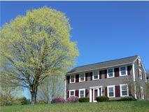 De lente: huis met ontluikende esdoornboom Stock Afbeelding