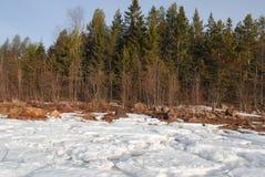 De lente ijzige beachfront Royalty-vrije Stock Afbeelding