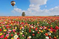 De lente in Israël Stock Foto's