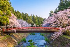De lente in Japan stock foto