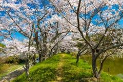 De lente in Japan Stock Foto's