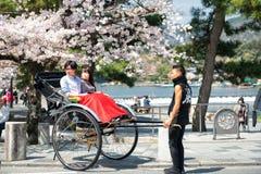 De lente in Japan stock afbeelding