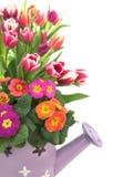 De lente in a kan Royalty-vrije Stock Afbeeldingen
