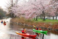 De lente Kayaking in de Promenade van Boston ` s royalty-vrije stock afbeeldingen