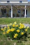 De lente: koloniale huisportiek met gele gele narcissen Stock Foto's