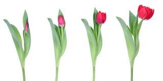 De lente komt Stock Afbeelding