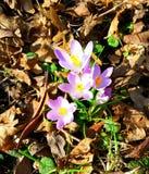 De lente komt royalty-vrije stock afbeeldingen