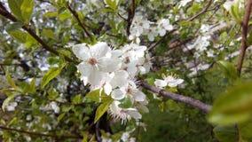 De lente komt Royalty-vrije Stock Afbeelding