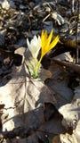 De lente komt stock foto's