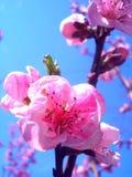 De lente komt Stock Afbeeldingen