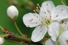 De lente komt aan Royalty-vrije Stock Foto's