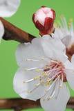 De lente komt aan Royalty-vrije Stock Afbeelding