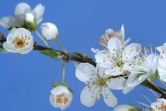 De lente komt aan Stock Afbeelding