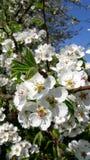 De lente komt aan de aard en onze harten stock foto's