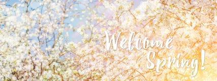 De lente komt appelboom in zonnige dag tot bloei royalty-vrije stock fotografie