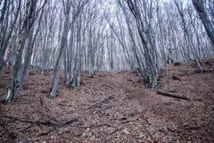De lente in Krimbergen royalty-vrije stock afbeeldingen
