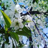 De lente kwam Royalty-vrije Stock Foto's