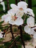 De lente kwam Royalty-vrije Stock Afbeeldingen