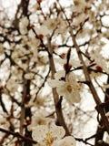 De lente kwam Royalty-vrije Stock Foto