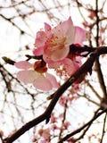 De lente kwam Stock Afbeelding