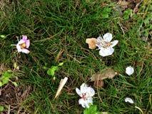 De lente kwam Stock Foto's