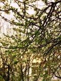 De lente kwam Royalty-vrije Stock Fotografie