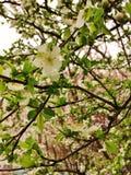 De lente kwam Stock Afbeeldingen