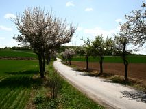 De lente landcape Stock Afbeeldingen