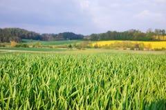 De lente landelijk landschap Beieren Duitsland stock afbeelding
