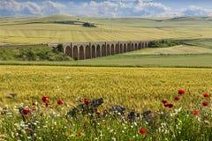 De lente landelijk landschap: spoorwegbrug op het groene tarwegebied Apulia Italië Royalty-vrije Stock Foto
