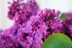 De lente lilac bloemen Macrobeeld van de lente lilac violette bloemen royalty-vrije stock afbeelding