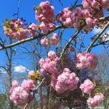 De lente in de lucht royalty-vrije stock fotografie
