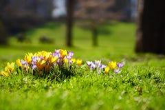 De lente in München stock afbeelding